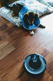 Melanie with Roomba